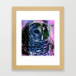 Rainbow Barred Owl Framed Art Print