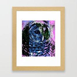 Rainbow Barred Owl Framed Art Print