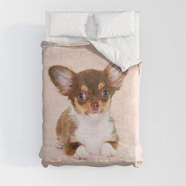 Cute Chihuahua Puppy Comforters