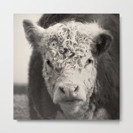 How Now Brown Cow Square Format Metal Print