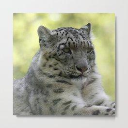 Leopard 2014-1003 Metal Print