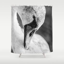 Swan close up Shower Curtain