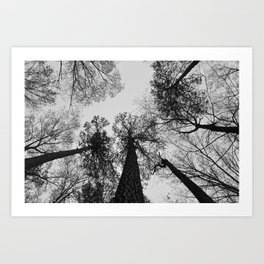 Tree Tops Art Print