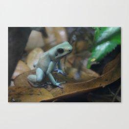"""Poison Dart Frog Phyllobates Terribilis """"mint"""" Canvas Print"""