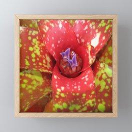 Beautiful Bromeliad Framed Mini Art Print