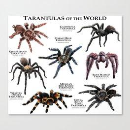 Tarantulas of the World Canvas Print