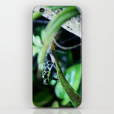 Imitator Dart Frog iPhone & iPod Skin