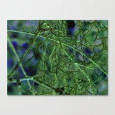 Nature's Lace Curtain Canvas Print
