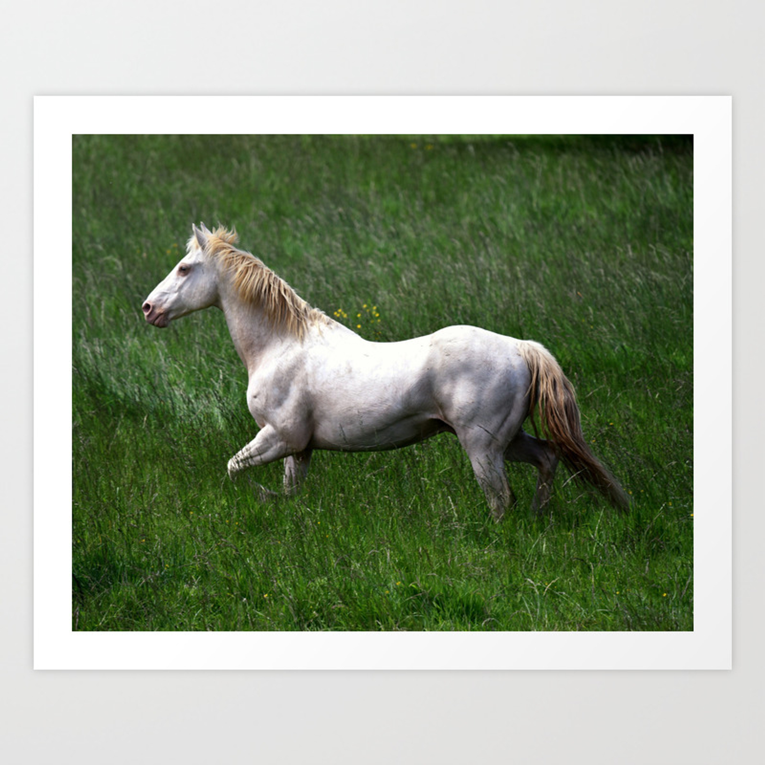 Beautiful White Horse Art Print By Teresachipperfieldstudios Society6