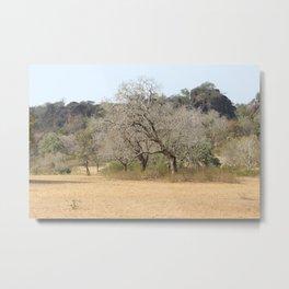 Nature in the dry Season Metal Print