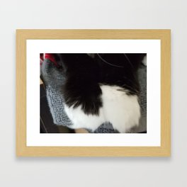 Kitten paws Framed Art Print
