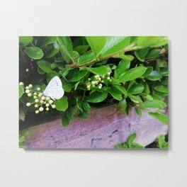 Butterfly in foliage Metal Print