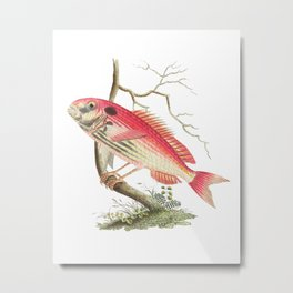 Fish Bird #1 Metal Print