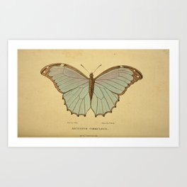 Vintage Print - Arcana or The Museum of Natural History (1811) - Arcuatus Coeruleus Butterfly Art Print
