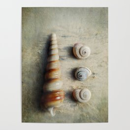 Shells on Beach wood. Poster