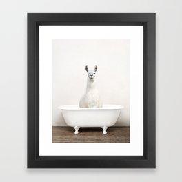llama in a Vintage Bathtub (c) Framed Art Print