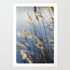 Camargue nature Art Print
