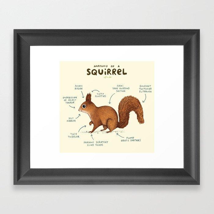 Anatomy of a Squirrel Gerahmter Kunstdruck