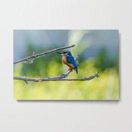 Bird Love Project 05 Metal Print