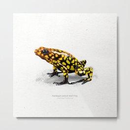Harlequin poison dart frog art print Metal Print