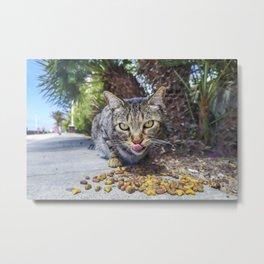 Grey cat eating Metal Print