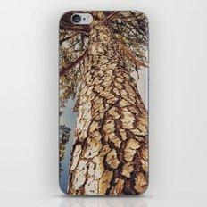 Tree 3 iPhone & iPod Skin