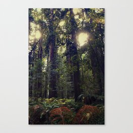 Sunrays in the Redwoods Canvas Print