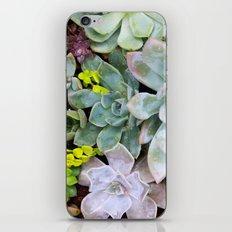Succulent Carpet iPhone & iPod Skin