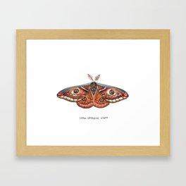 Small Emperor Moth (Saturnia pavonia) Framed Art Print