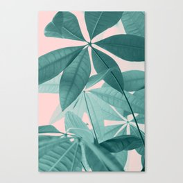 Pachira Aquatica #5 #foliage #decor #art #society6 Canvas Print