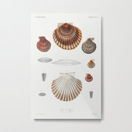 Clam shell varieties set  from Mollusca  Shells by Augustus Addison Gould Metal Print