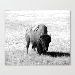 Big Daddy On His Range Canvas Print