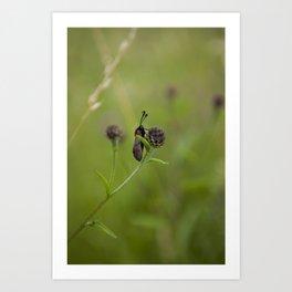 Six-Spot Burnett Moth Art Print
