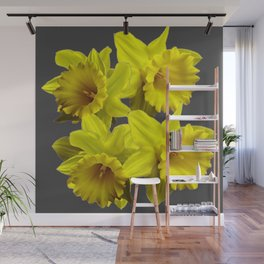 YELLOW SPRING DAFFODILS & CHARCOAL GREY COLOR Wall Mural