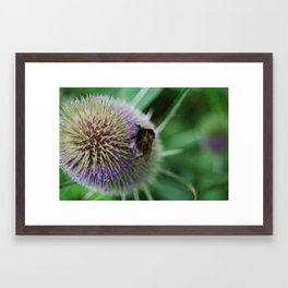 Bee in the summer Framed Art Print