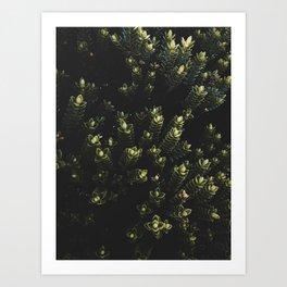 Wildflower Series - Milford Sound Art Print