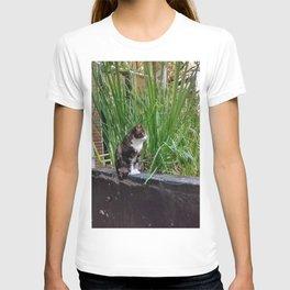 Amsterdam Cat T-shirt