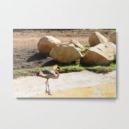 East African Crowned Crane Metal Print