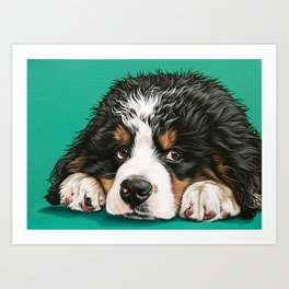 Cute Bernese Mountain Dog Puppy Pet Portrait Art Print
