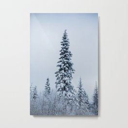 First Snow Fog Metal Print