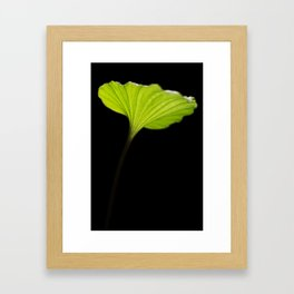 Leaf of the nervilia aragoana  Framed Art Print