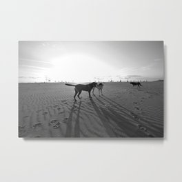Dogs on the Beach Metal Print