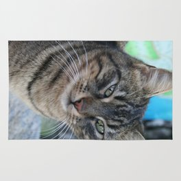 Inquisitive Tabby Cat With Green Eyes  Rug