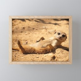 Meerkat Suricat suricatta Sunbathing #decor #society6 Framed Mini Art Print