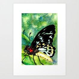 Birdwing Art Print