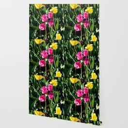 """Muscogee (Creek) Nation - Honor Heights Park Azalea Festival, Tulip """"Critical Mass"""" Wallpaper"""