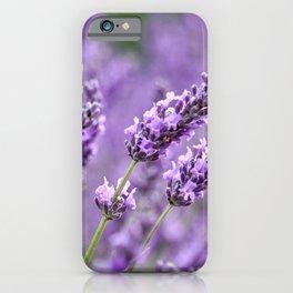 Bee Lavender iPhone Case