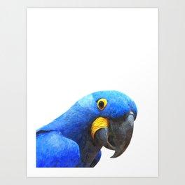 Blue Parrot Portrait Art Print