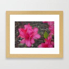 Red Flowers 1 Framed Art Print