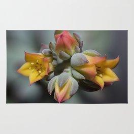 Succulent Blossom Rug